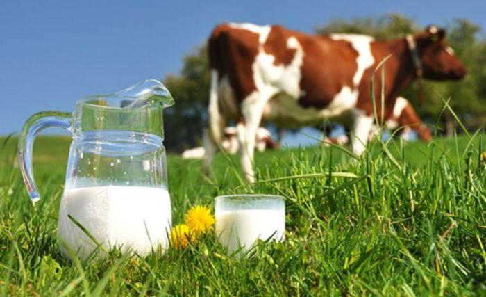 Можно ли пить молоко
